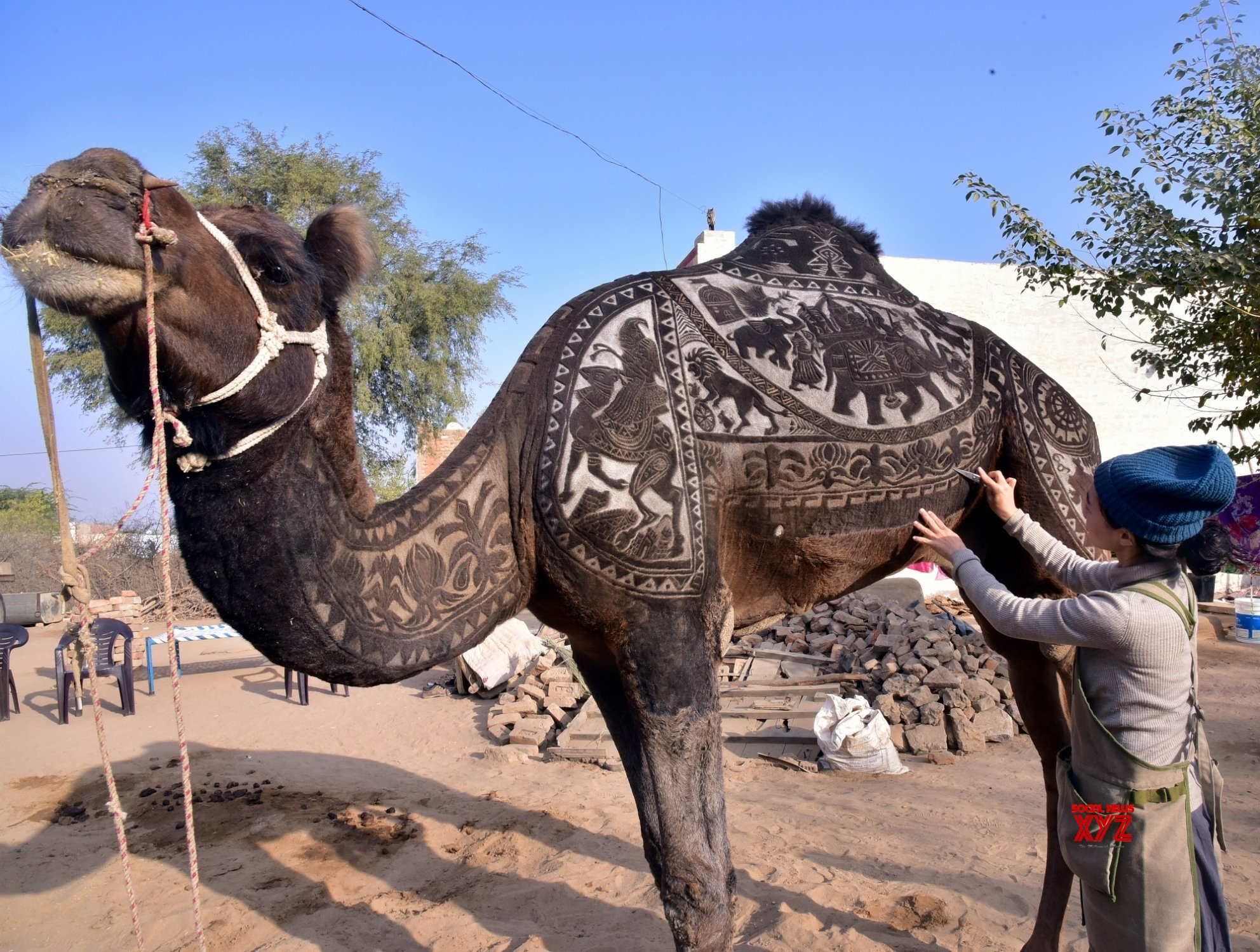 Bikaner: Camel Festival - Japanese artist' designs on camel's body #Gallery