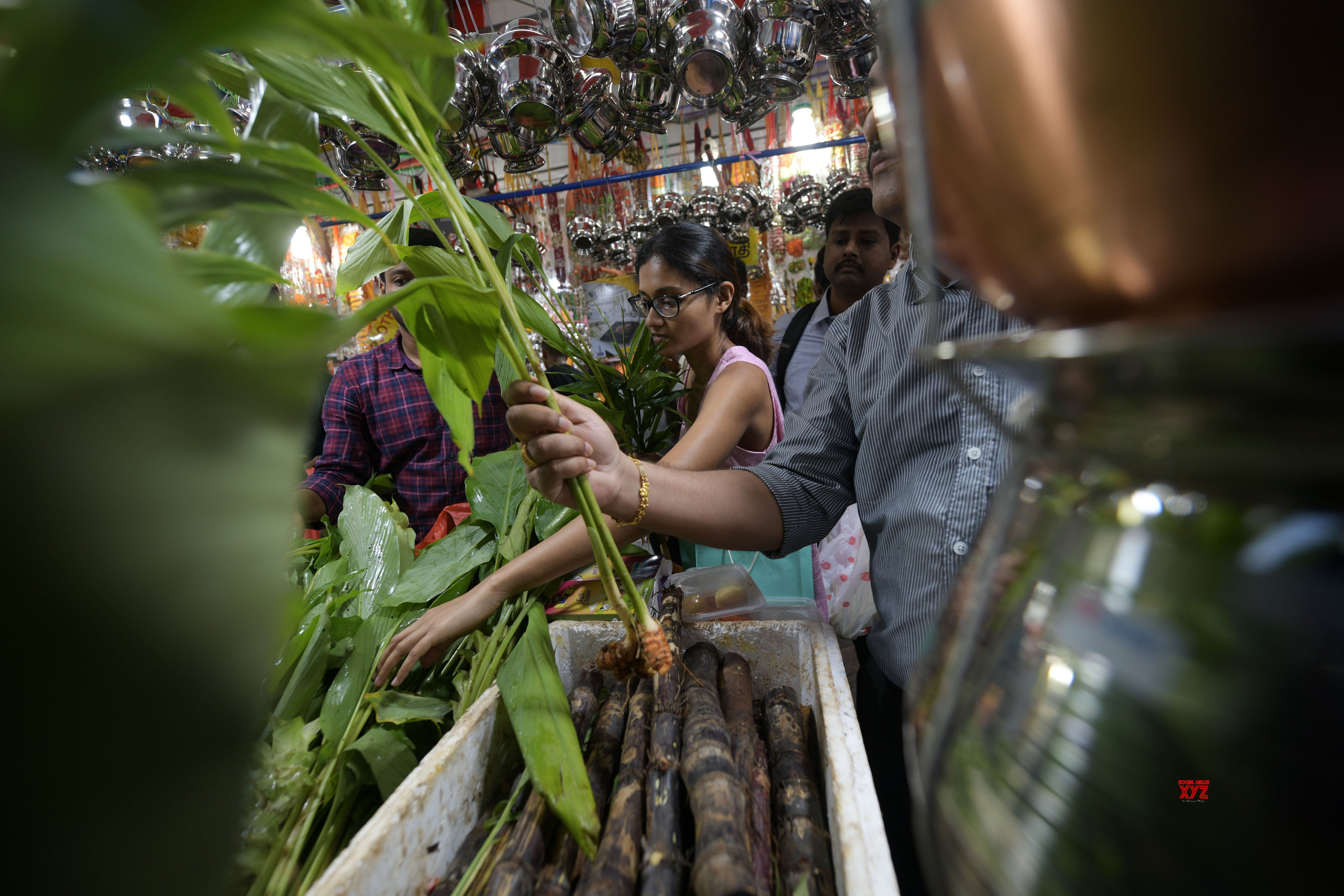SINGAPORE - PONGAL FESTIVAL - CELEBRATIONS #Gallery