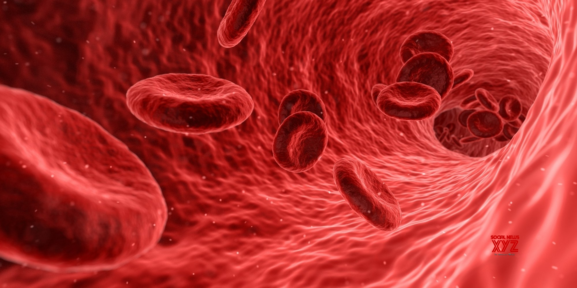 Stem cell protein may help find blood cancer cure