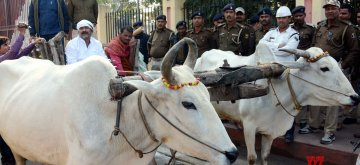 Patna: Congress MLA Amit Kumar Tunna arrives at Bihar Assembly on a bullock cart in Patna on Feb 11, 2019. (Photo: IANS)