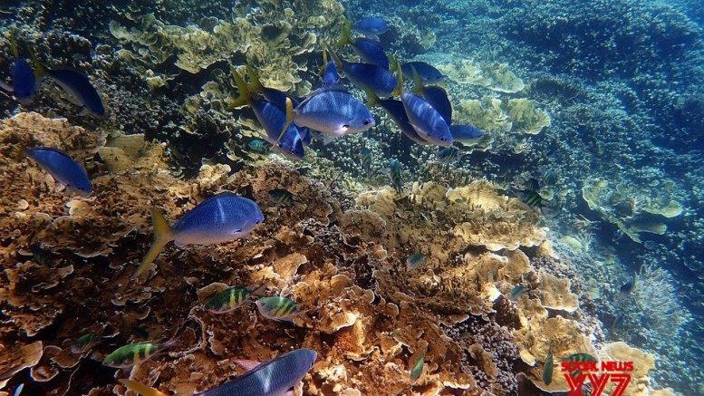 New mass bleaching event at Great Barrier Reef