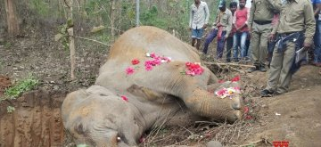 Hojai: The elephant that died after getting hit by Guwahati-Ledo Intercity Express train near Lumding in Hojai district of Assam on April 16, 2019. (Photo: IANS)