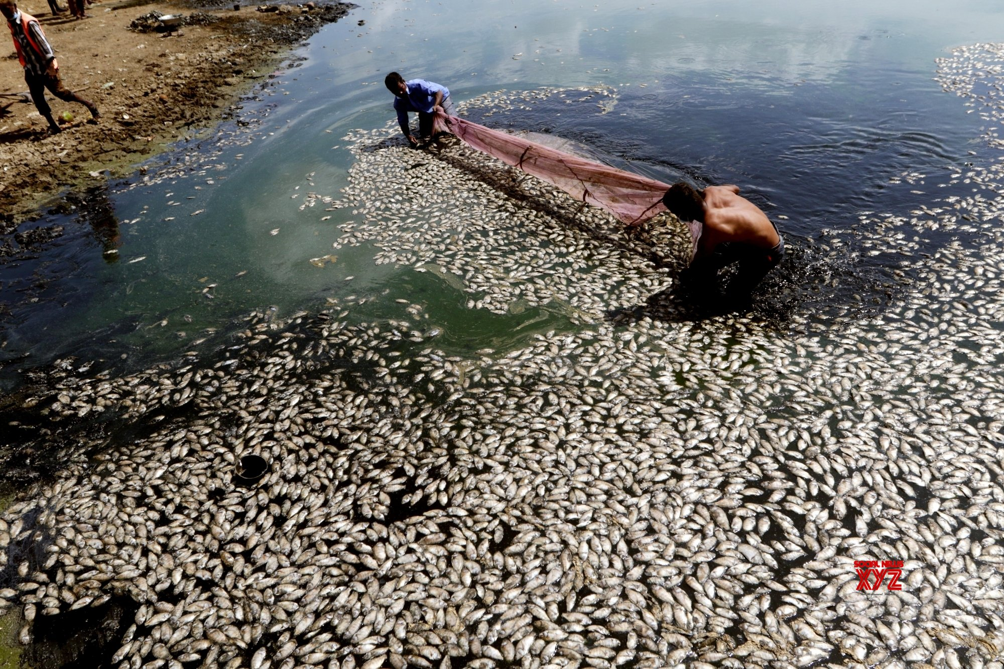 Chennai: Fishes killed in polluted lake #Gallery