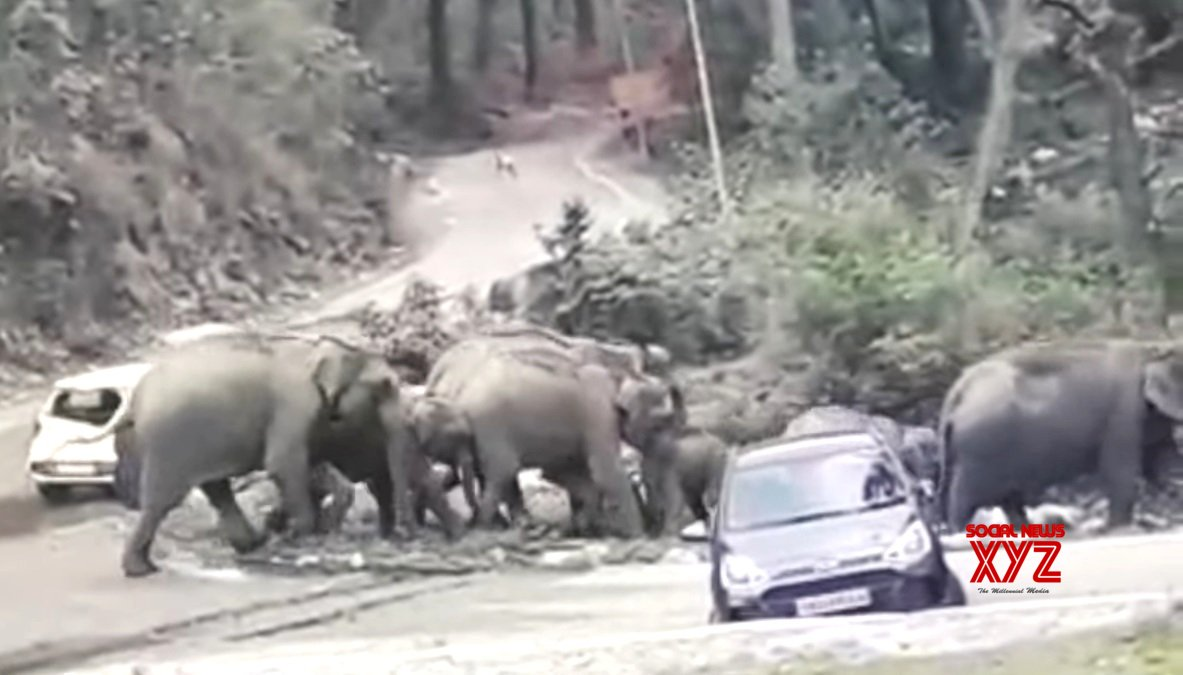 Wild tuskers being guided back to their habitat
