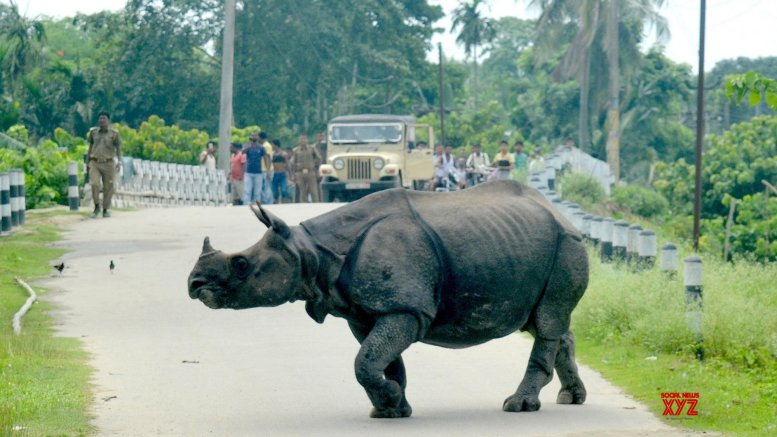 Assam Minister warns officers against illegal trade of forest resources