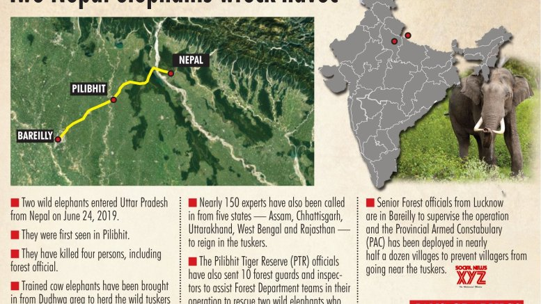 Wild tuskers continue to roam in UP, forest staff on alert