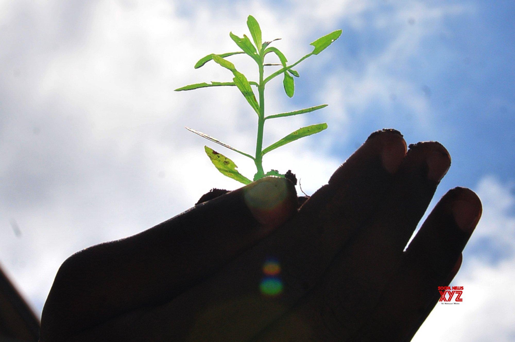 UP launching major plantation drive for 'miracle' Sahjan tree