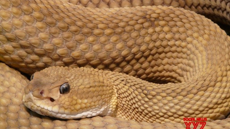 Biker runs over snake in UP, faces tough chase