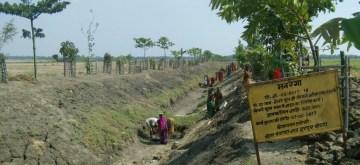 Smstipur: Harpur Bochanan Panchayat in Bihar's Samastipur is famous for its greenery. (Photo: IANS)