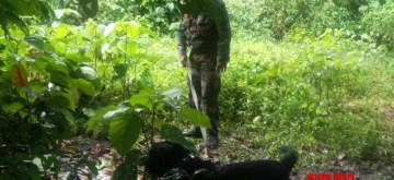 Jaari, a three-year-old female black Labrador who staved off a possible terror attack in Assam by helping security forces discover a huge cache of arms and ammunition in Panbari Forest Reserve. As per officials, the cache of weapons had been buried under the soil and Jaari led security forces all the way to the spot by sniffing the ground. (Photo: IANS)