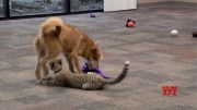 Cheetah and puppy team up at Ohio zoo [HD] (Video)
