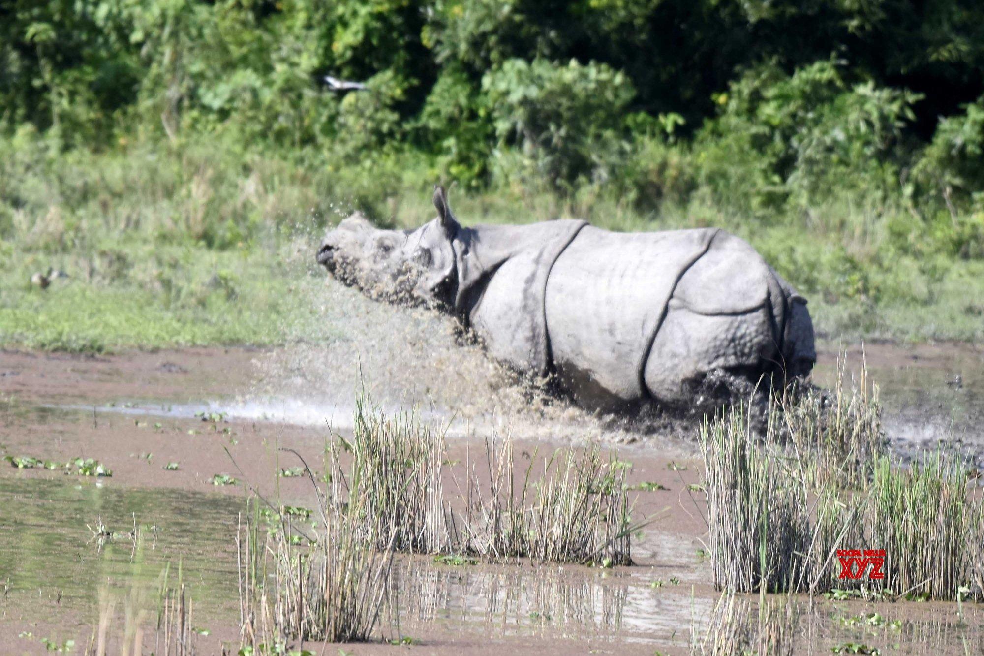 Bagori (Assam): Kaziranga National Park reopens for tourists #Gallery