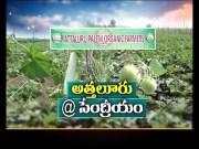 Attaluru of Guntur | Heading Towards Top Rank in Organic Farming | On Globe  (Video)