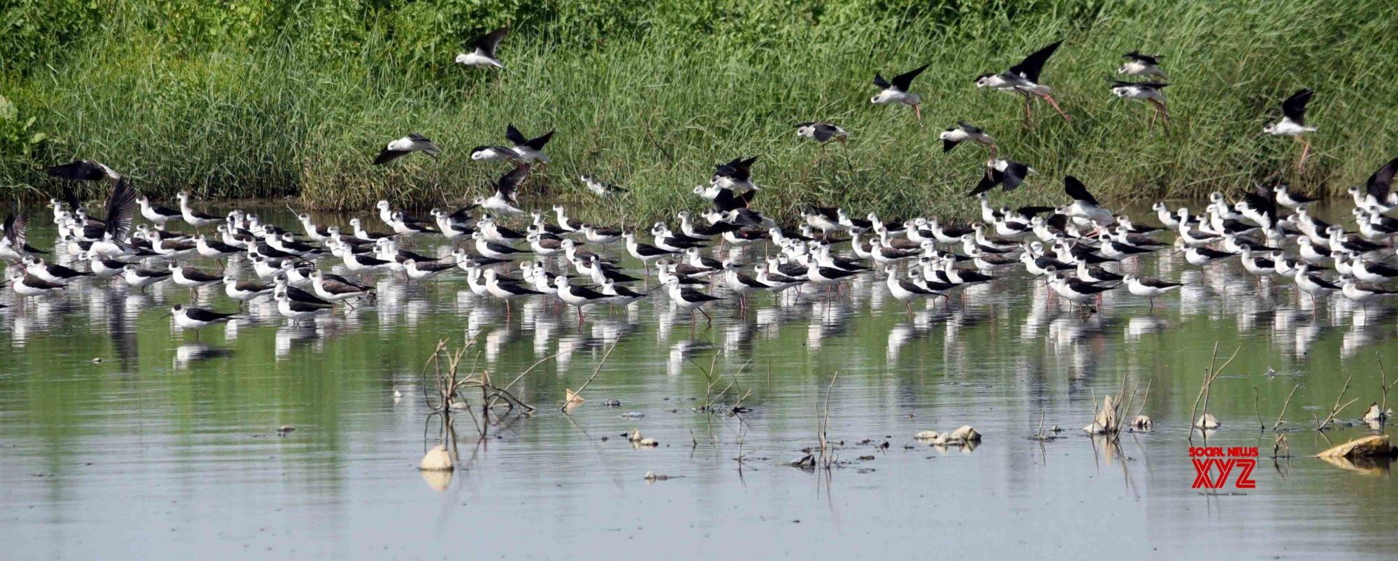 Caged migratory birds seized in Assam village