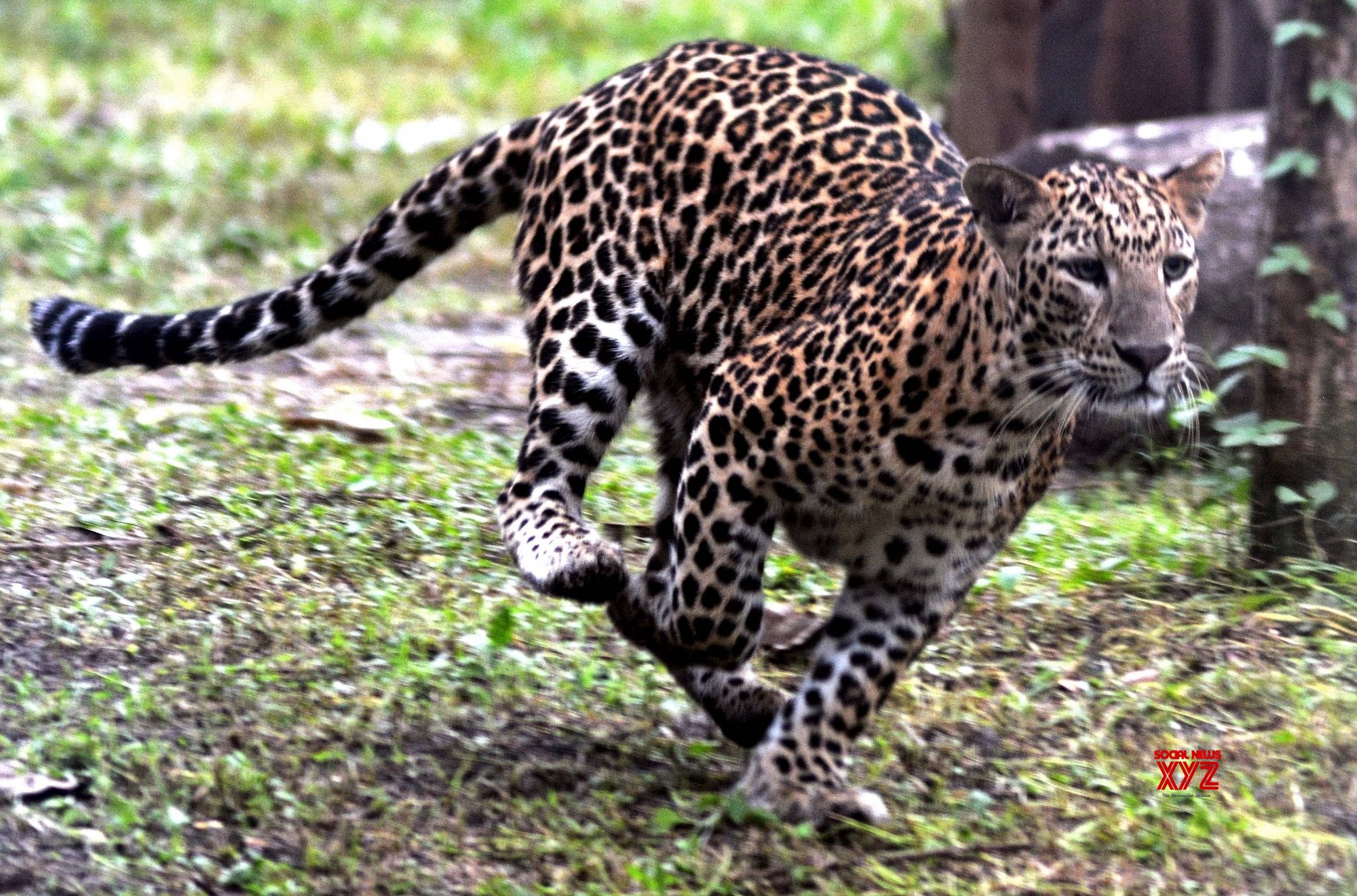 Anti-leopard attack advisory says 'play loud music', 'wear helmets'