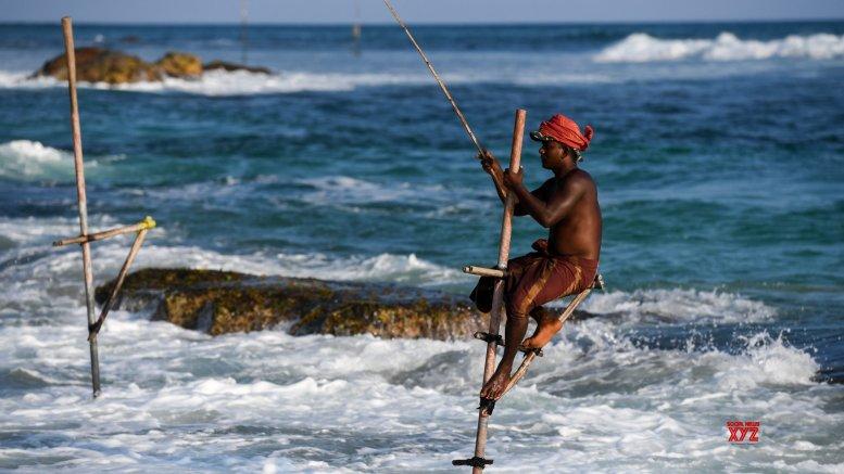 SL to probe illegal shark fishing