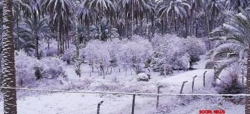 Residents of Baghdad wake up to rare snowfall.
