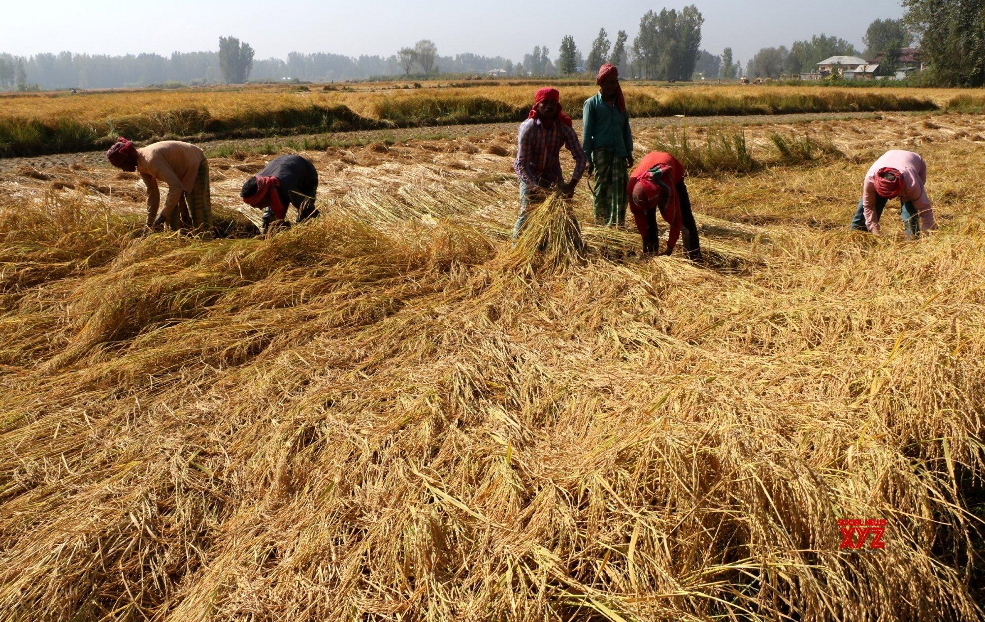 Punjab, Haryana farmers fear lockdown may hit harvesting, procurement
