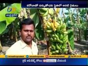 COVID 19 | Banana farmers Facing Problems at Timmapuram  (Video)