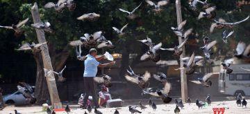 Bengaluru: A man feeds pigeons at Chamarajpet Eidgah Grounds in Bengaluru on May 24, 2020. (Photo: IANS)