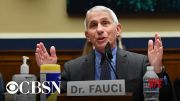 Watch live: Fauci and health officials update Senate on returning to work and school amid COVID (Video)
