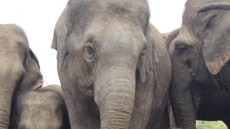 Amid Covid gloom, elephant calf brings cheer to B'luru Zoo