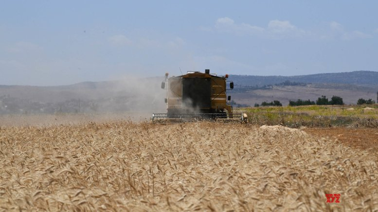 Zimbabwe to double wheat output: Minister