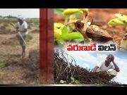 Rains Turn Villain on Farmers | as Incessant Downpour Continues | In Anantapur District  (Video)