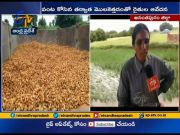Crops damaged due to heavy rains at Anantapur district  (Video)