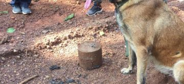 ITBP dog 'Sophia' foils IED blast in Chhattisgarh, saves lives.