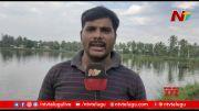 NTV: Aqua Farmers Gets Huge Loss Due To Heavy Rains In West Godavari (Video)
