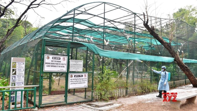 Covid symptoms in eight lions at Hyderabad zoo