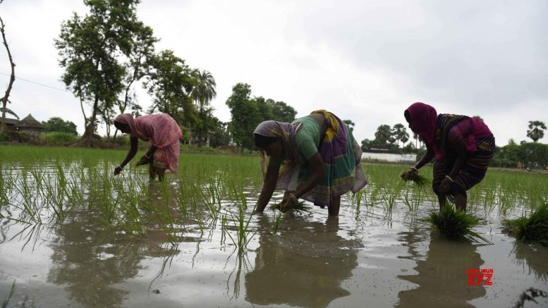 Corteva to co-lead in promoting rice production in UP