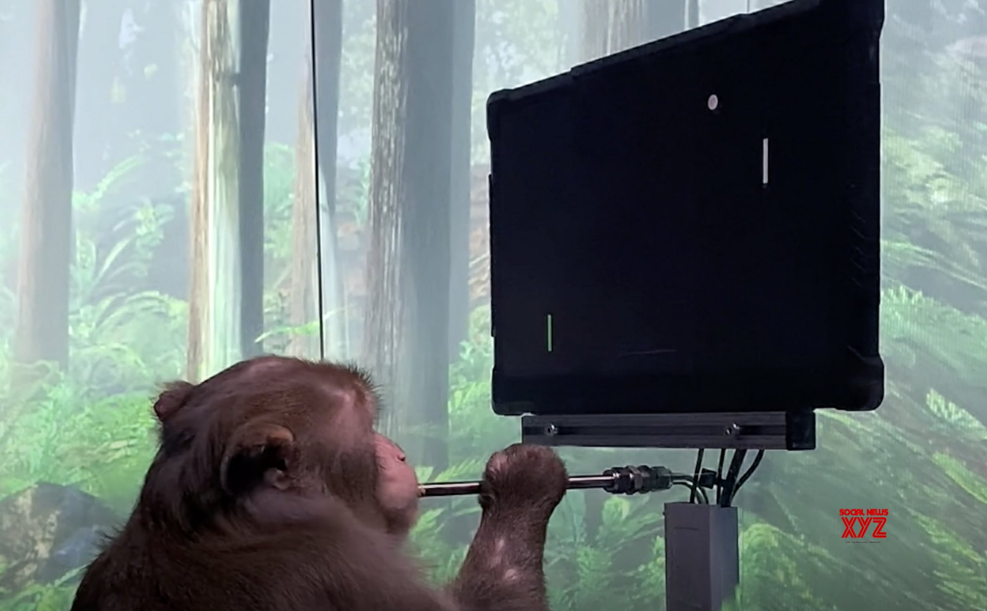 Musk's Neuralink shows how monkey plays Pong with his mind