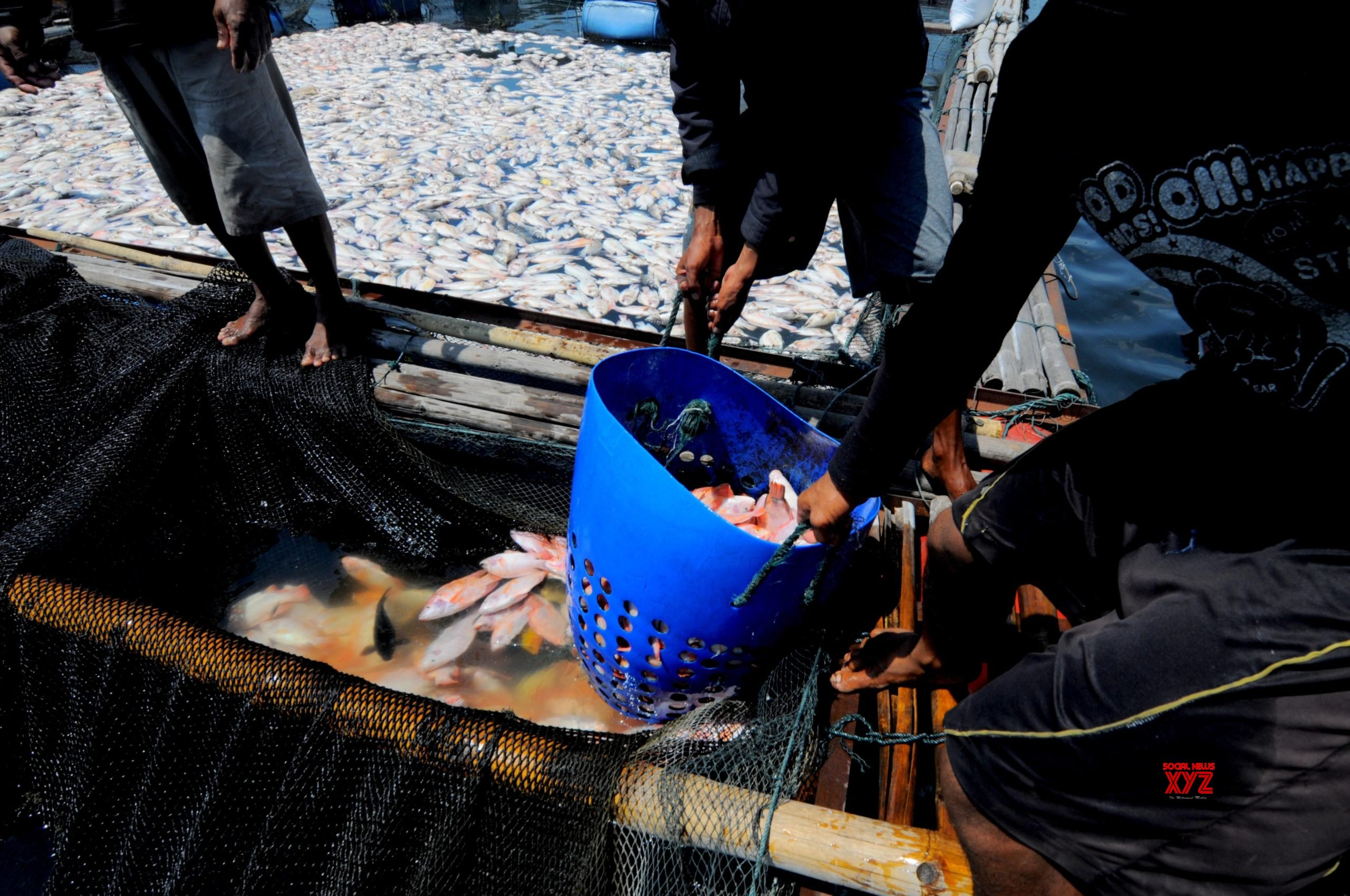 No-take marine reserves compensate lost fishing grounds: Study