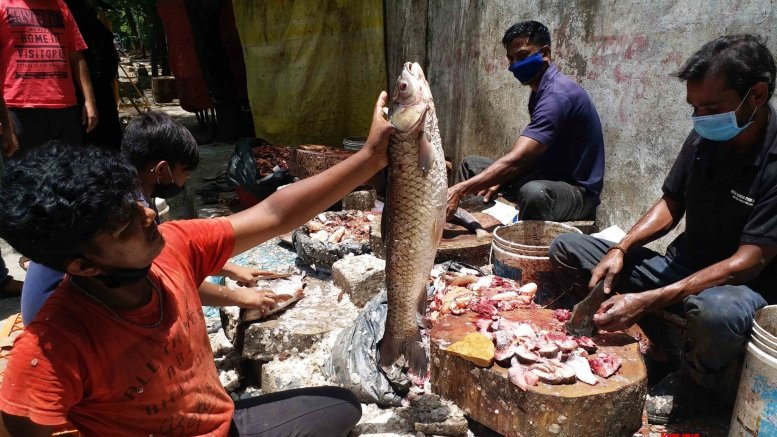 Fish trade hit after Covid bodies dumped in river