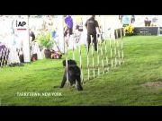 Prestigious dog show opens in New York (Video)