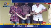 Python Rescued From College Classroom | Odishas Malkangiri |        (Video)