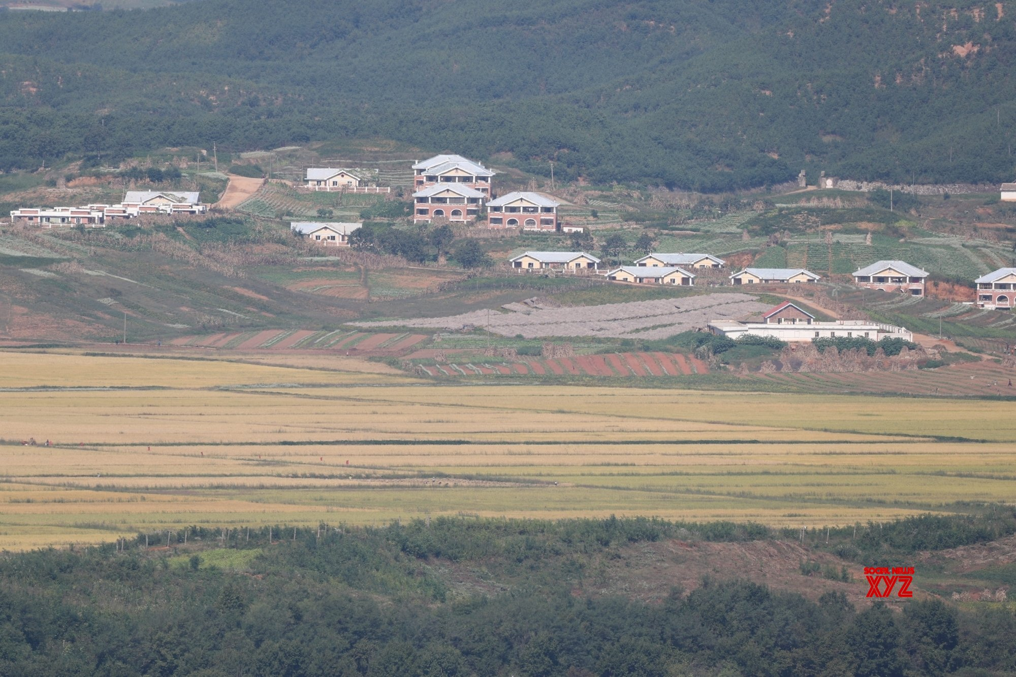 Seoul : Yellow paddy fields in N. Korea #Gallery