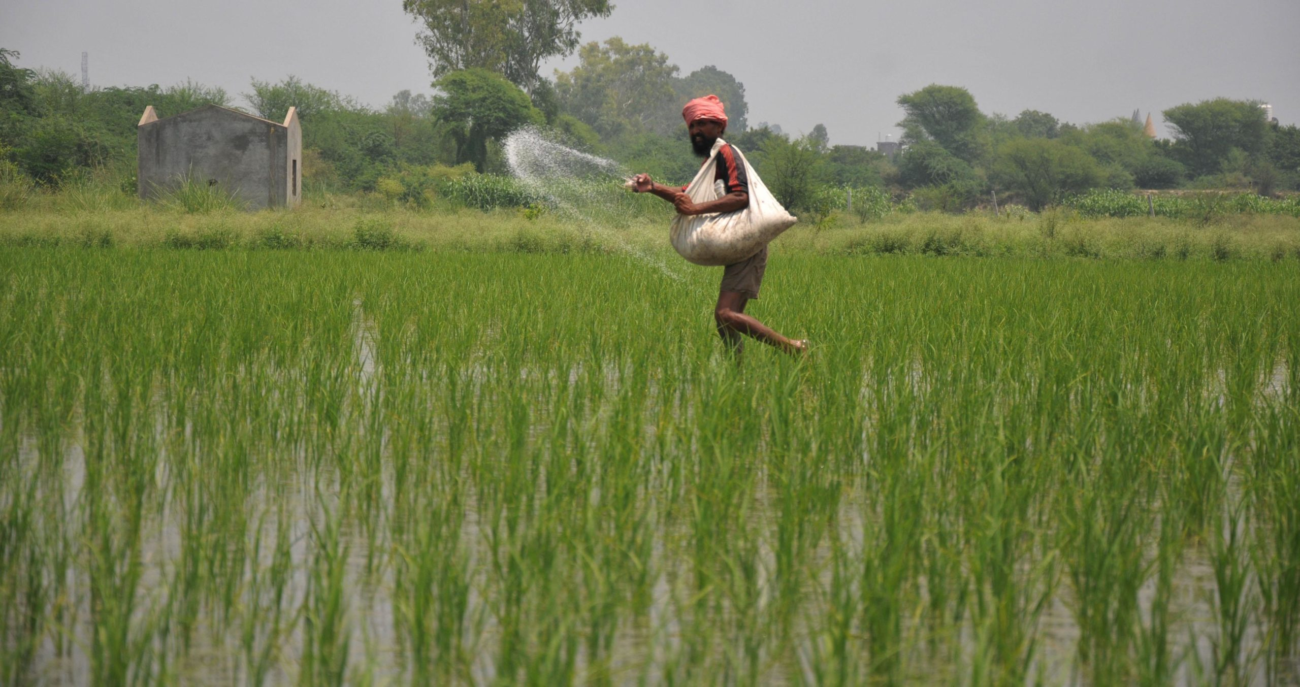 Govt continues price rollover of P&K fertilizers till March 2022