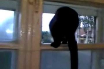 Barking-cat-gets-caught-ORIGINAL