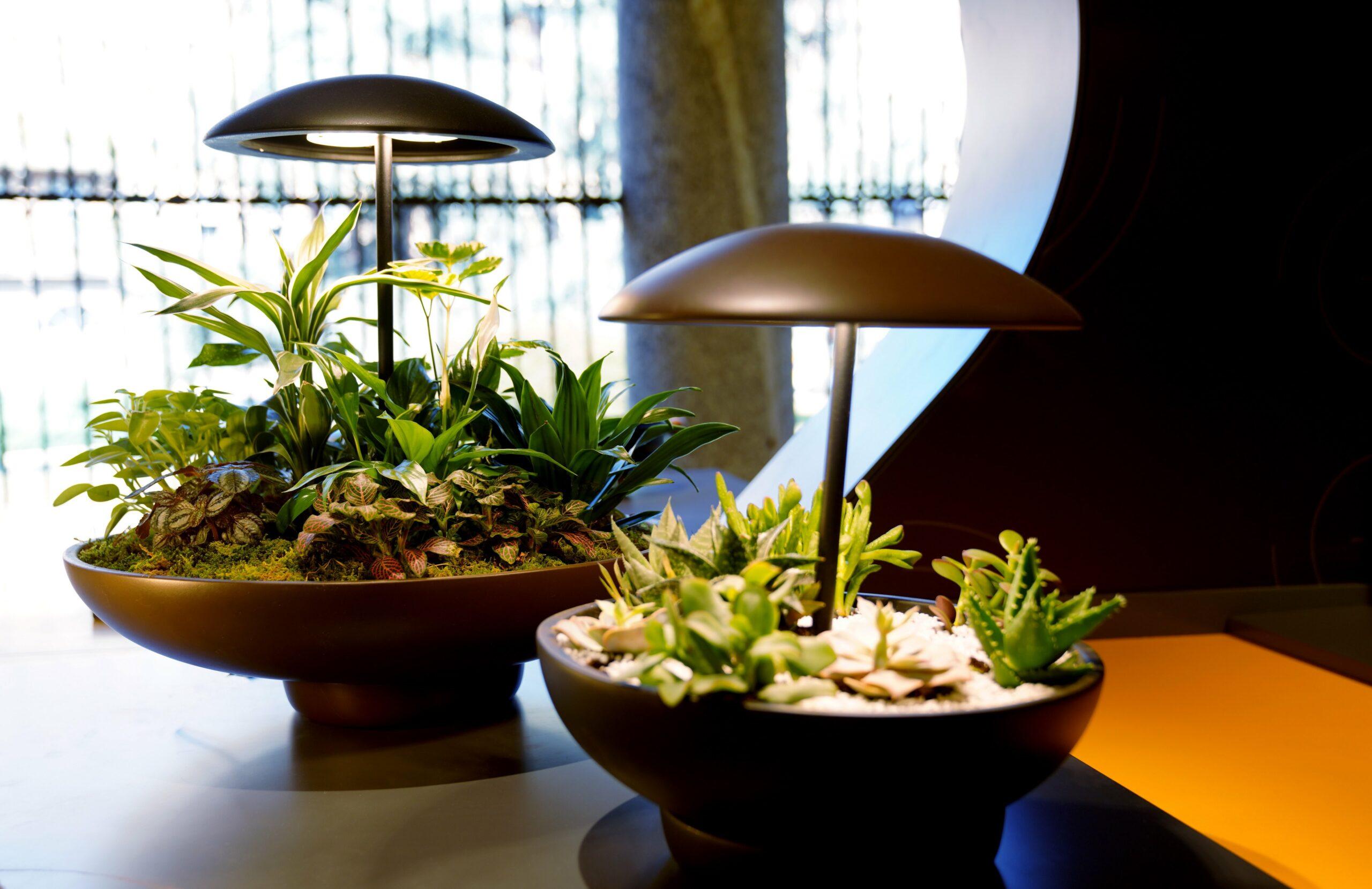 Garden: la lampada da tavolo con mini giardino, disegnata da Maurício D'Ávila per la Milano Design Week