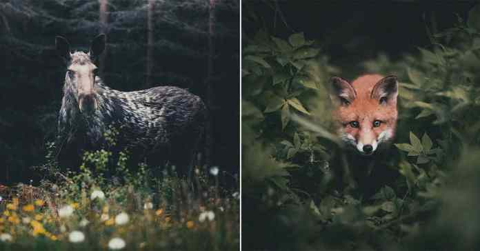 Photographer Captures The Soul Of The Forest With His Unbelievably Intimate Animal Shots