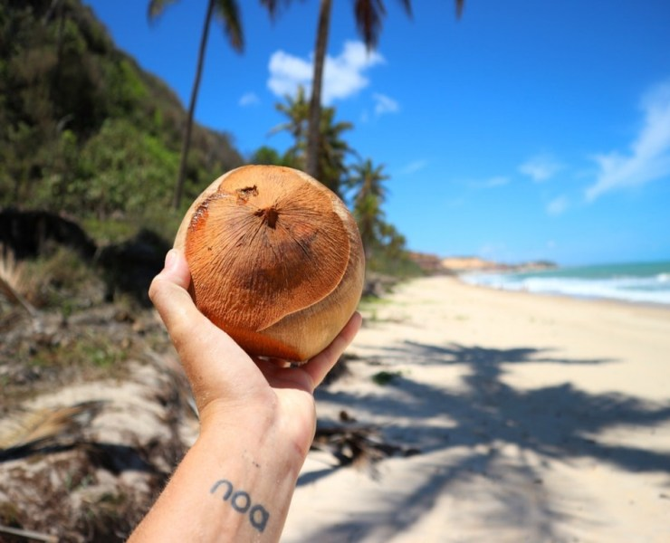 At this point in time, everyone and their grandmothers know about the numerous coconut oil benefits, but some of us might not realize just how many diverse uses there are to be discovered.