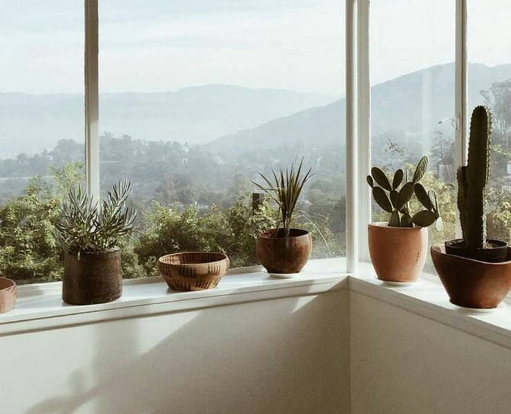 Indoor plants are great for any space. Many retailers offer either faux or real plants, but we have rounded up the most affordable and reliable. Take a look at the best sites to buy indoor plants!