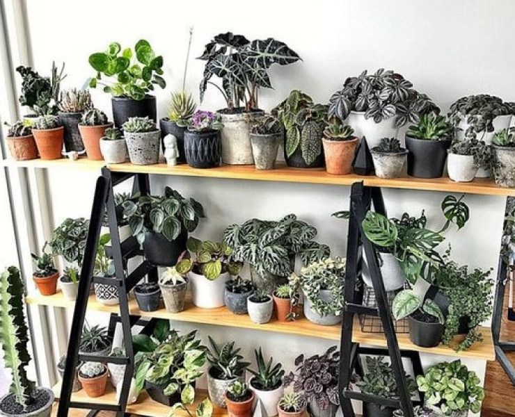 Do you have the tiniest house ever and no room for that fiddle-leaf plant? We've got you sorted with these tiny plants you just have to have!