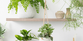 Got killer hands that spread dead leaves to every plant you touch? No worries! We know the unkillable indoor plants you need to have!