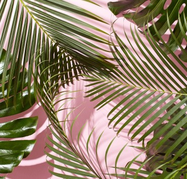 Vacations are expensive, but cute indoor plants? That we can swing. These are the cutest indoor plants for all your tropical needs!