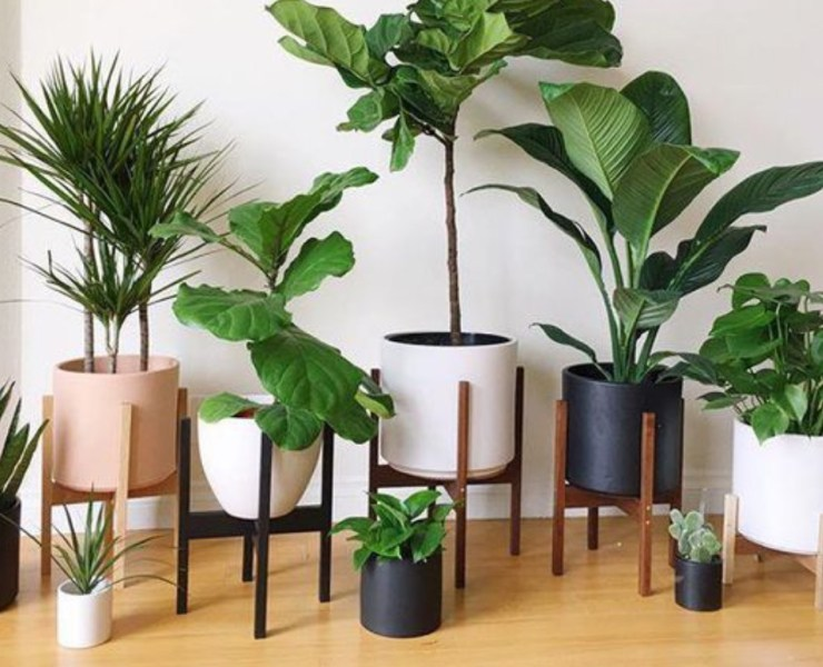 I love having plants in my dorm room. They could be just the thing you need to turn your room from dull to lively! Check out our suggestions!