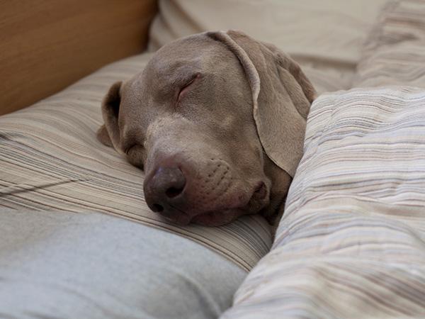 sleep more